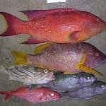 いろいろな魚